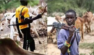 Dwindling grazing pastures is the source of increased conflicts between Nigeria's Fulani herdsmen and other communities