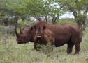 Technology anticipated to eradicate rampant poaching