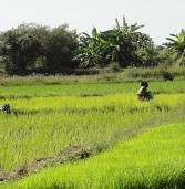 Madagascar farmers request aid to produce more food