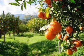 SA citrus exports bear brunt of strikes, ports issues