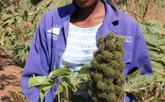 EXCLUSIVE: Jatropha project an inspiring international success