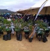 Mpumalanga marks annual Arbor Week
