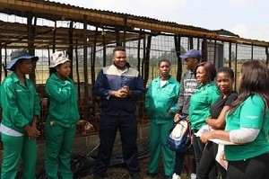 Mpumalanga Provincial Member of the Executive Committee (MEC) for Agriculture, Rural Development, Land and Environmental Affairs, Mr Vusi Shongwe with aspiring young agriculturists specialising in piggery, sheep and poultry management. Photo by Anna Ntabane, CAJ News Agency