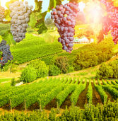 Winemaker thrives after adopting technology